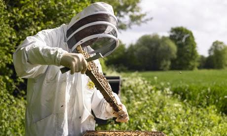 Αρχάριος μελισσοκόμος : Πως θα αποκτήσω τα πρώτα μου μελίσσια;