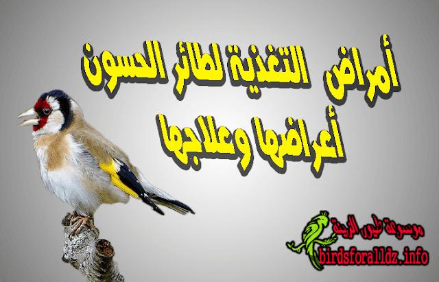 امراض التغذية لطائر الحسون أعراضها وعلاجها