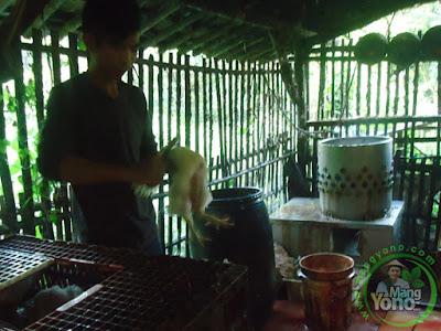 Potong Ayam di usaha potong ayam Mang Jamal, Kmp. Ciyuda, Des. Bendungan, Kec. Pagaden Barat, Subang