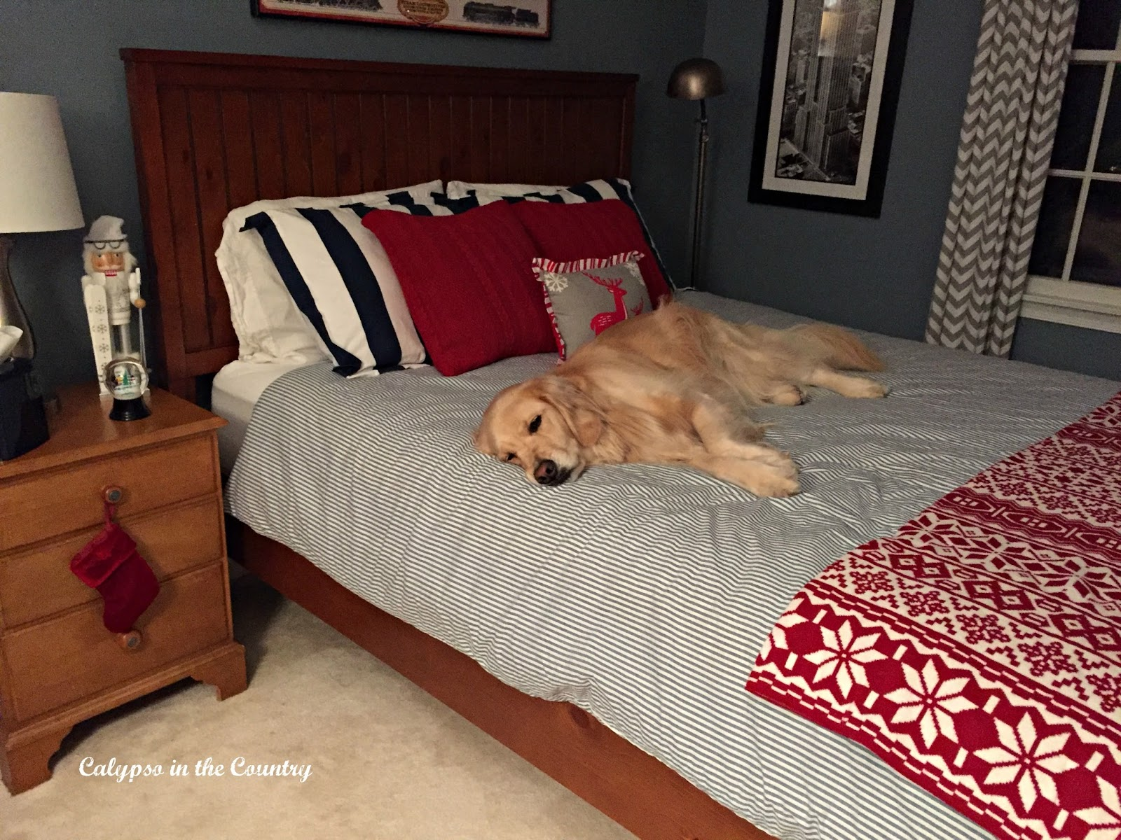 Golden Retriever on Bed