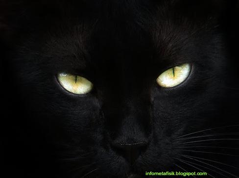 Gambar Kucing Hitam Lucu godean.web.id