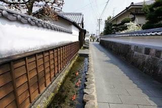 Penampakan got Saluran Air Di Jepang Yang Jernih dan Penuh Ikan