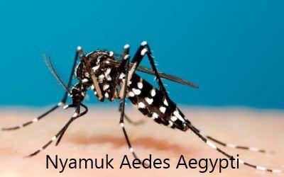 6700 Gambar Hitam Putih Nyamuk Gratis