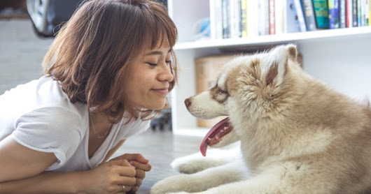 Mindful Living Benefits Pets