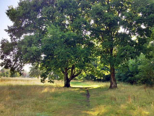 Summer walk in Surrey England