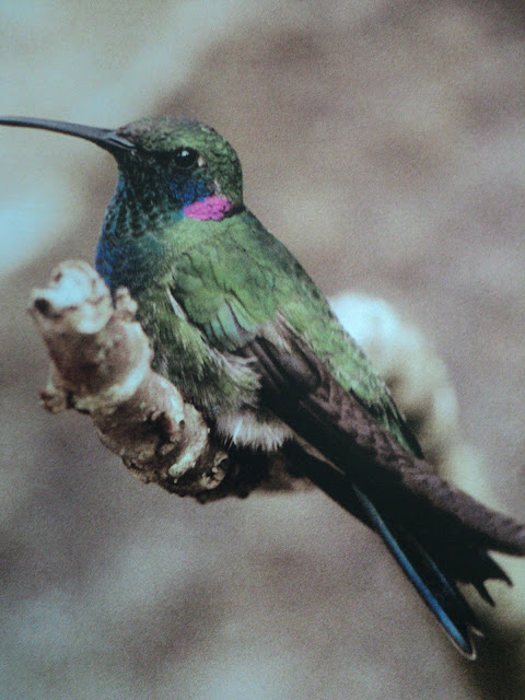 Pássaro, oração