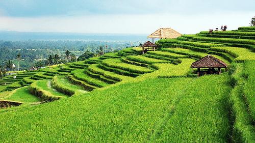 Kabupaten Tabanan Bali Paket Wisata Bagus