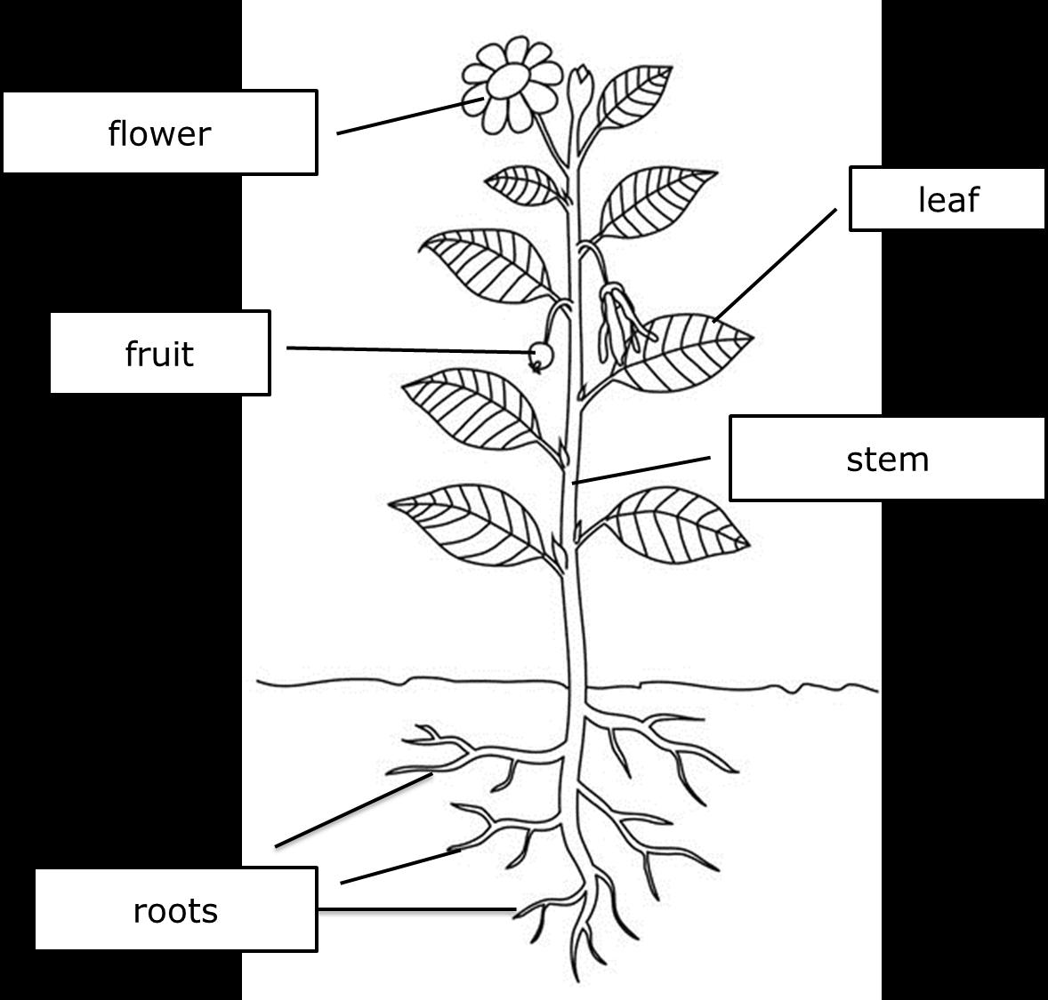 P3 Science  Plants