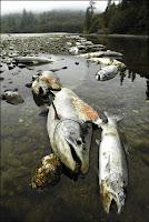 contaminacion flora y fauna