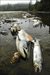 Contaminación de la Flora y Fauna