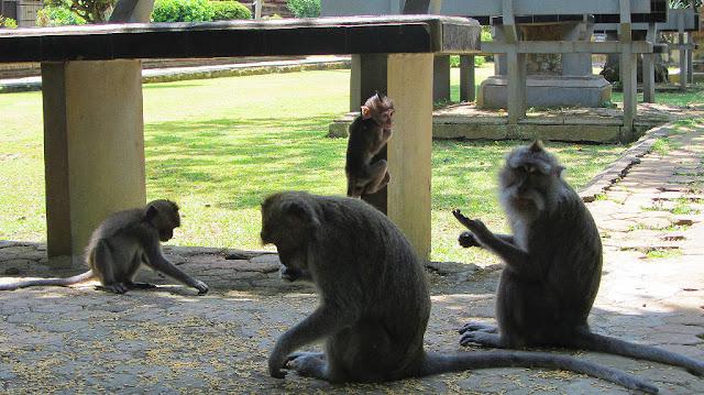 monyet di sangeh