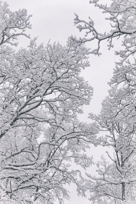 talvi, luonto, winter, winterwonderlans, lumi, snow, scandinavia, stillmoments, nature, naturephotography, luontovalokuva, Visualaddict, valokuvaaja, Frida Steiner, trees, puut, metsä