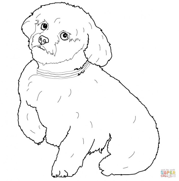 Dogs Coloring Pages Free Short Hair Maltese Dog Page Large Size