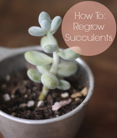 How To: Grow & Propagate Succulents