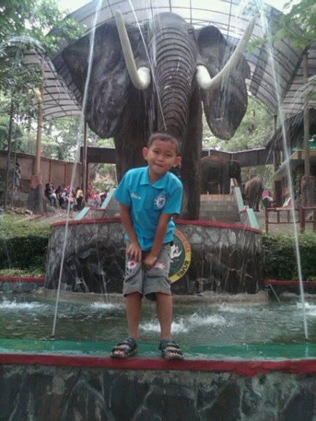 Gajah  taman safari