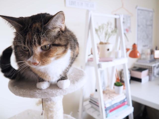 cat in interiors