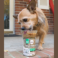 Nutro Wild Frontier Vital Prey Canned Dog Food review