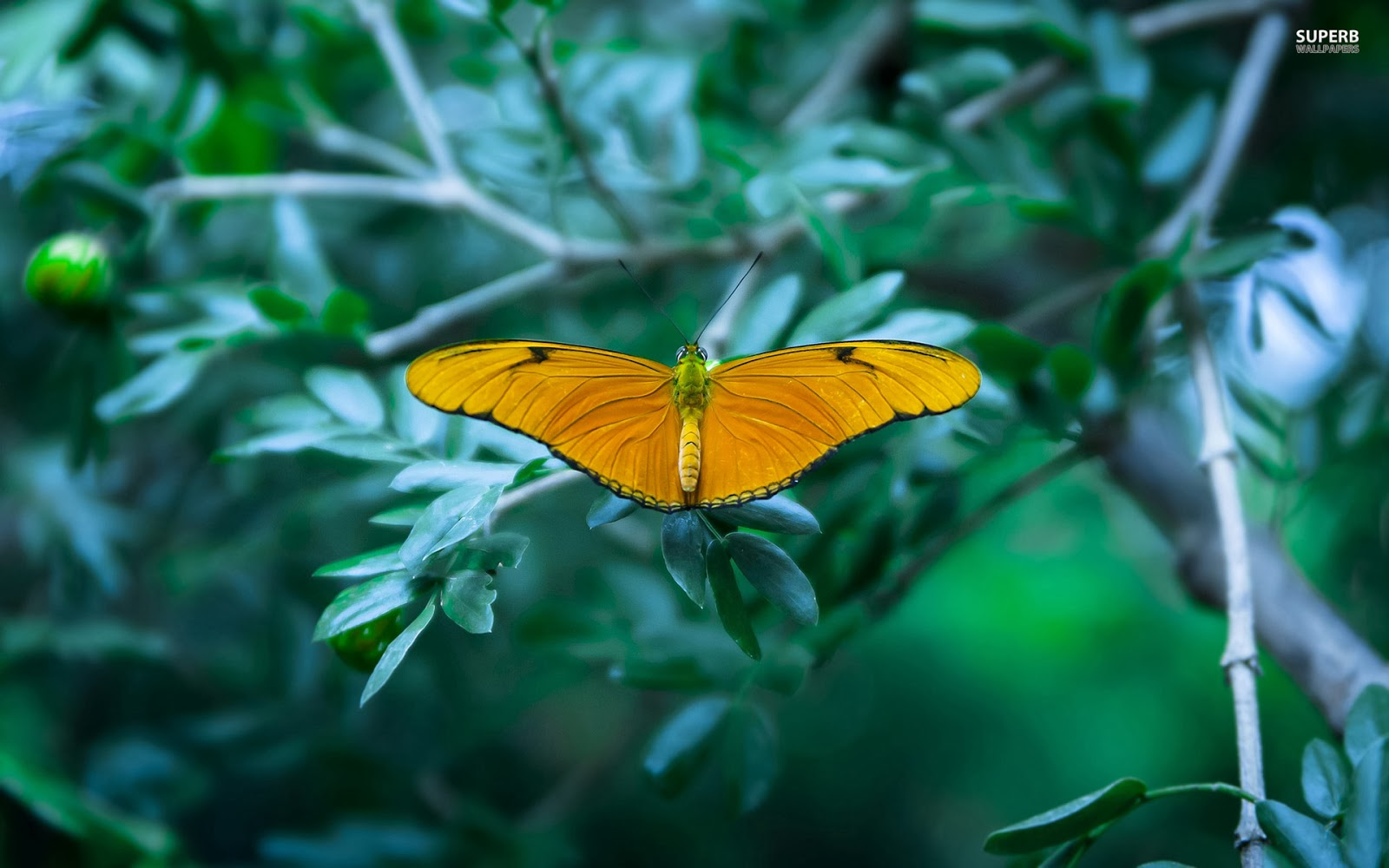 yellow butterfly wallpaper free - photo #10