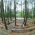 Harga Tiket Masuk dan Lokasi Wisata Hutan Pinus Mangunan