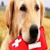 """Δράση με θέμα """"Πρώτες Βοήθειες σε ζώα συντροφιάς"""" από το Π.Τ. Ε.Ε.Σ. Ιωαννίνων"""