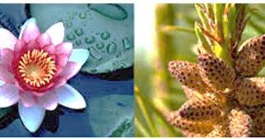 Perhatikan gambar dua tanaman di bawah ini! Kedua tanaman ...