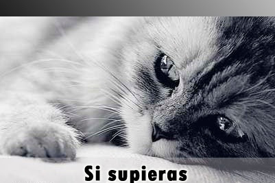 Imagenes D Amor Tristes Con Frases
