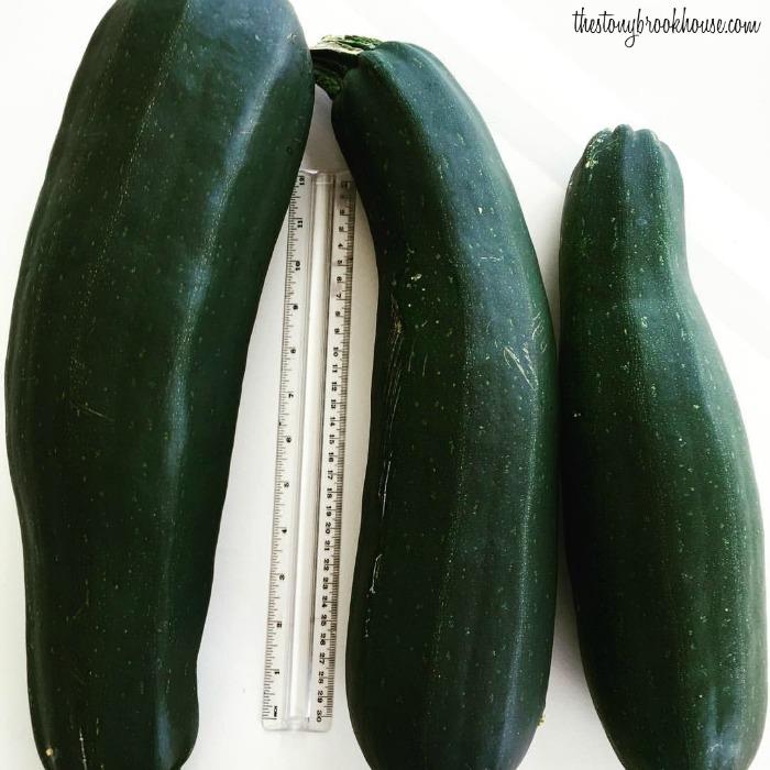 Garden Fresh Zucchini