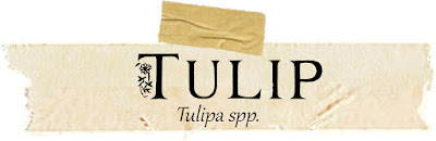 Magical and Medicinal Uses of Tulip. Includes FREE BOS page!