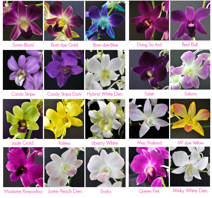 Why we love orchids for prom corsages! #PromFlowers