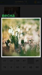 наступила весна и распустились цветы подснежники