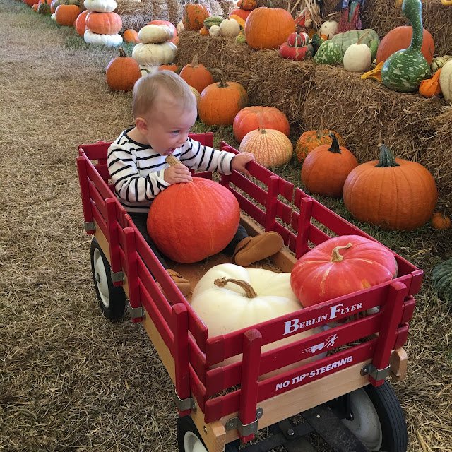 Stilettos and Diapers Pumpkin Patch