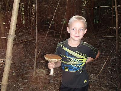 grzyby 2017, grzyby w sierpniu, grzyby na Orawie