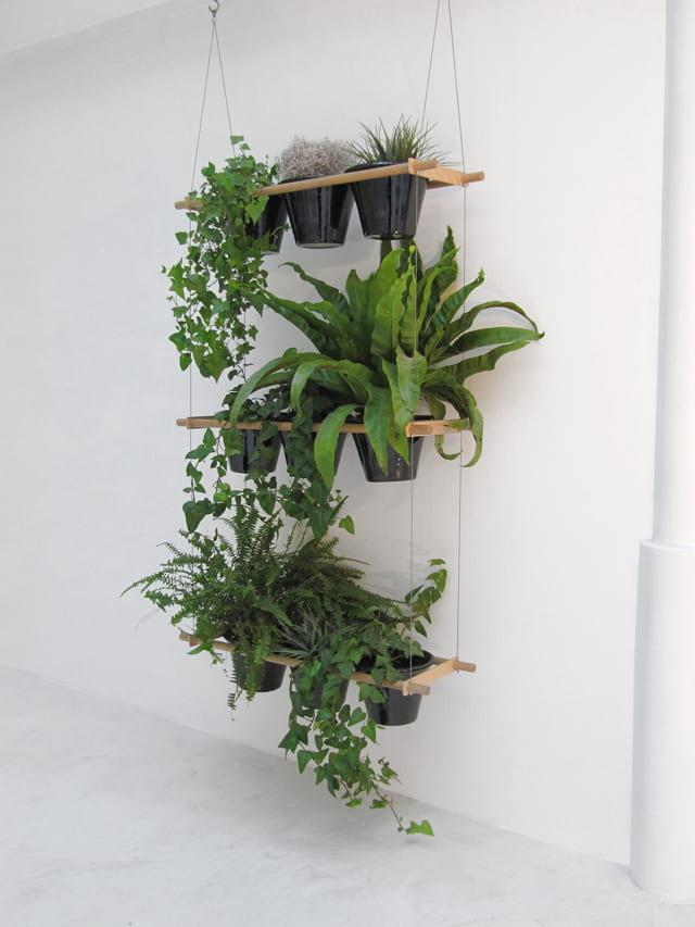 gambar tanaman hias gantung