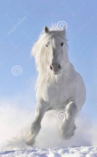 Edan! Pria Ini Bercinta Dengan Seekor Kuda dan Merekamnya
