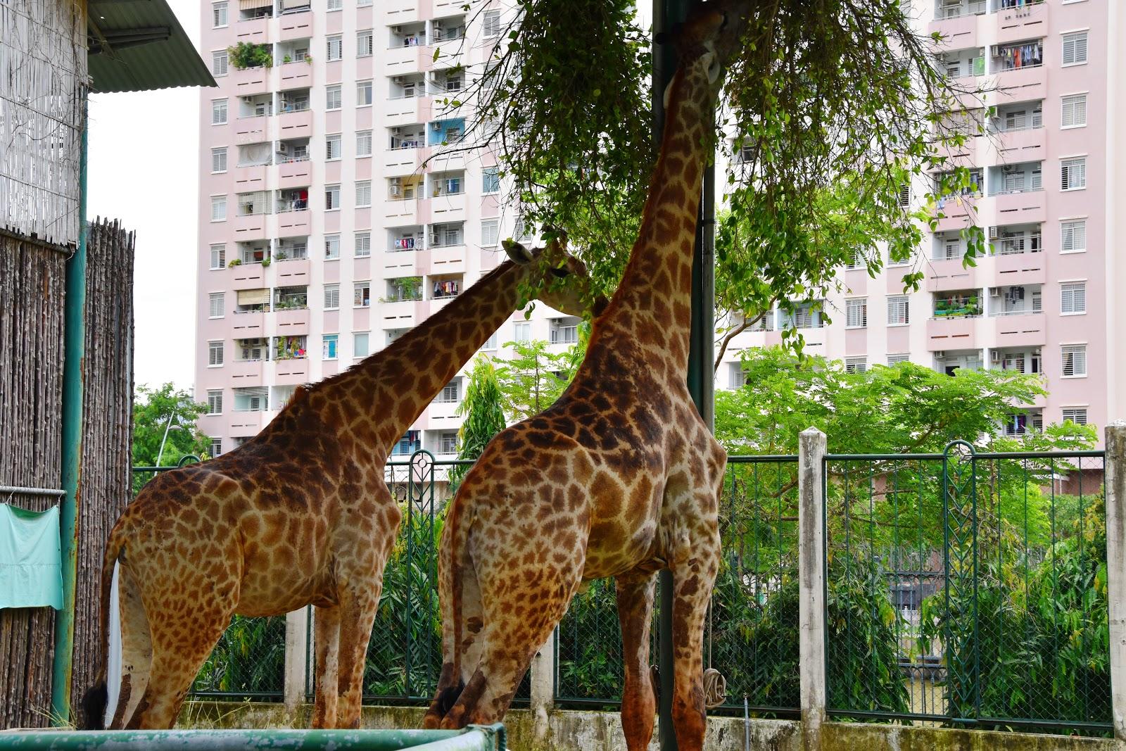 Doan: Saigon Zoo