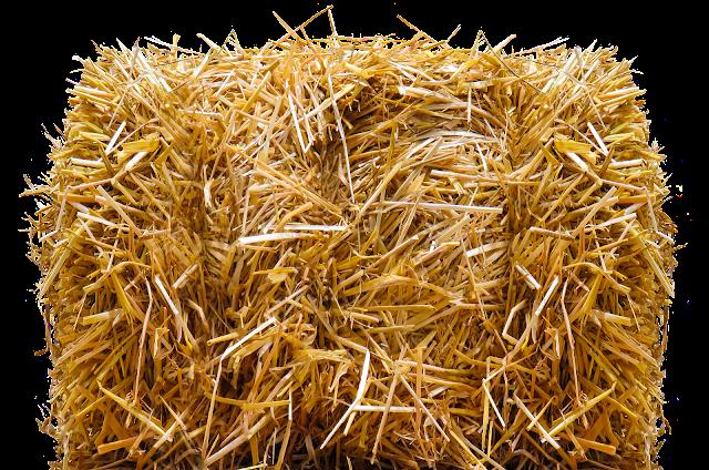 Ternak Sapi, Peternakan, Cara membuat pakan fermentasi jerami, Pakan alternatif untuk sapi potong, membuat Jerami fermentasi untuk pakan sapi, Penggemukan sapi dengan jerami fermentasi, Budidaya sapi,