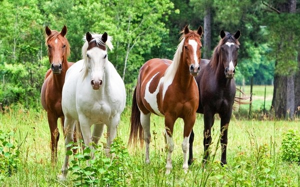 HD Widescreen Wallpaper of Horses in 1080p Widescreen