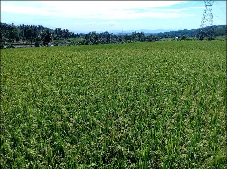 Candi Tridharma Cipanas, Udara dan Alam Pedesaan