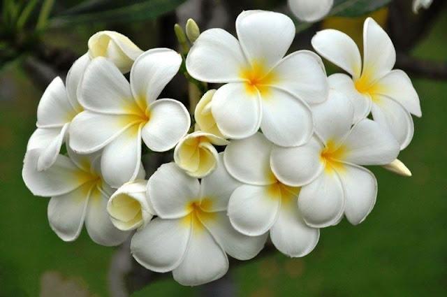 hình ảnh hoa đẹp nhất thế giới 19