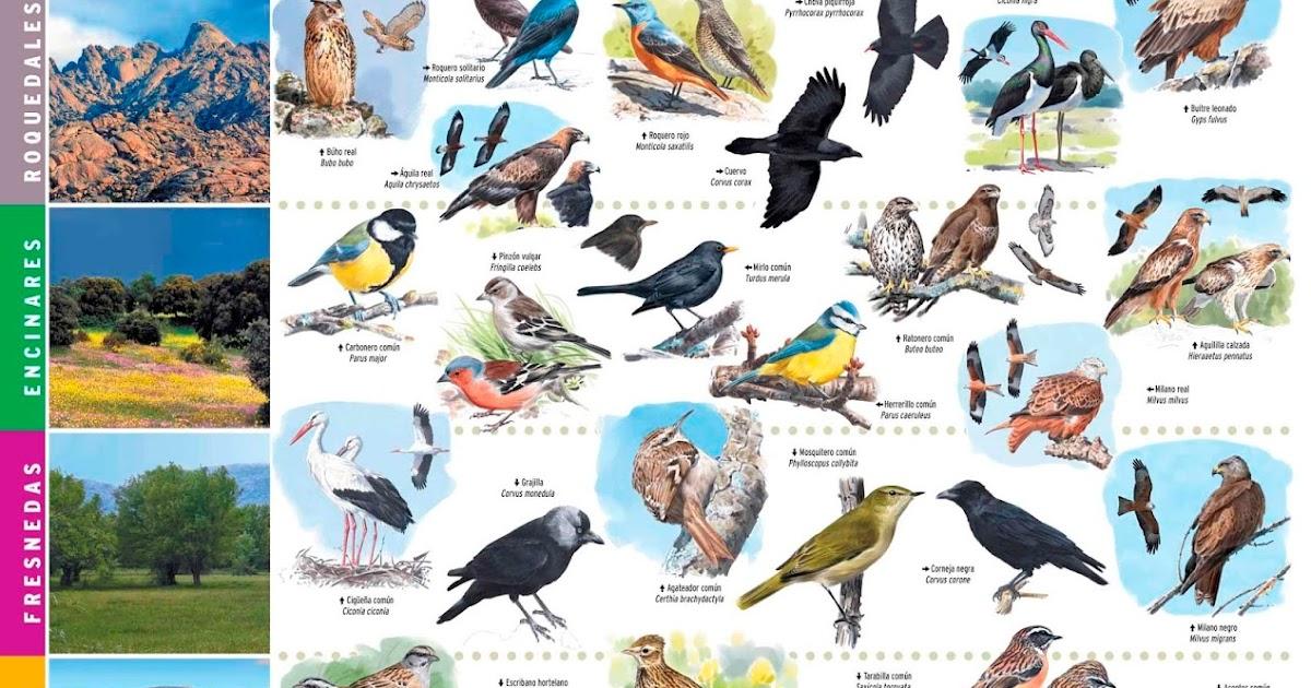 Aves silvestres de España   En Los Álamos