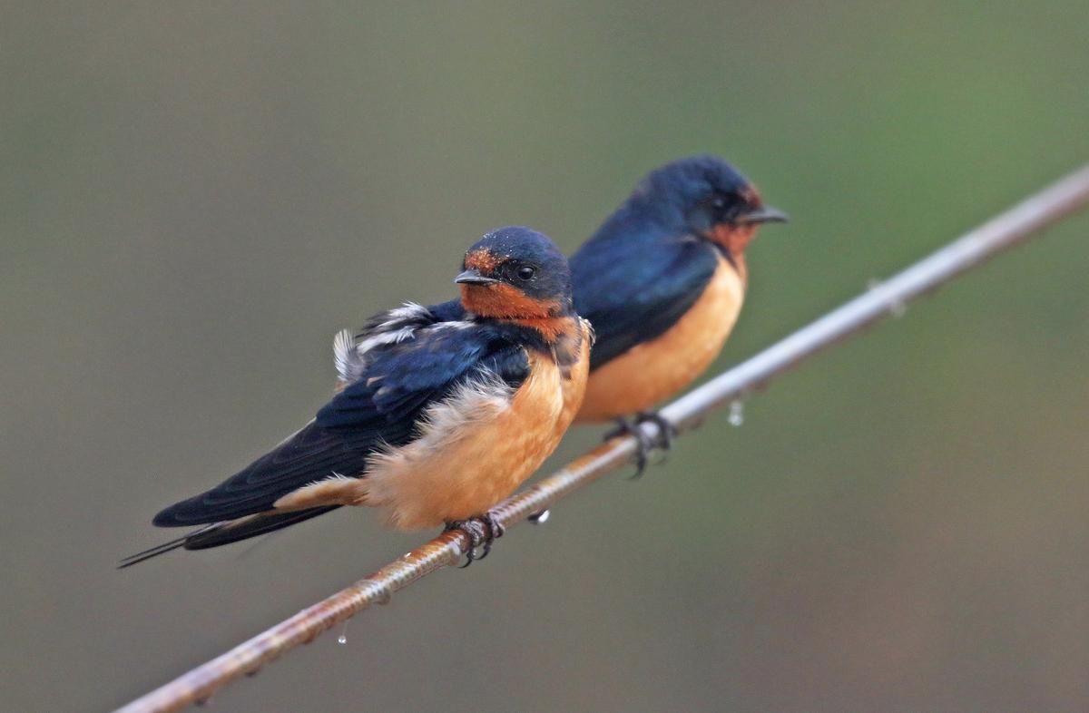 Natural Sciences  Evolution Genetics And Animal Behavior