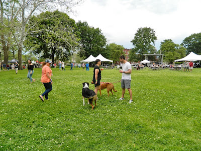 Dogs are allowed at the festival