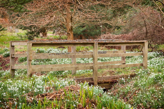 Woodland bridge and snowdrops at Howick Hall in Northumberland by Martyn Ferry Photography