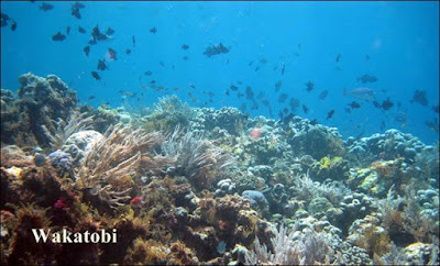 Potensi Pariwisata Bahari Indonesia