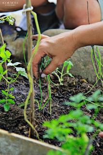 Permacultura em Pequenos Espaços