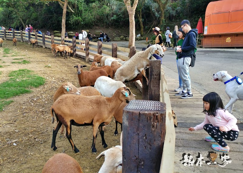 媲美清境青青草原|苗栗飛牛牧場|乳牛綿羊生態區~擠牛奶餵小羊小牛體驗