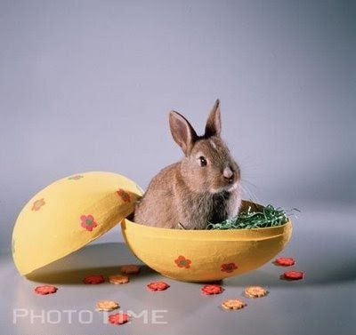 Happy Easter Wallpaper Quotes Animals Zoo Park Happy Easter Animals Pics Funny Easter
