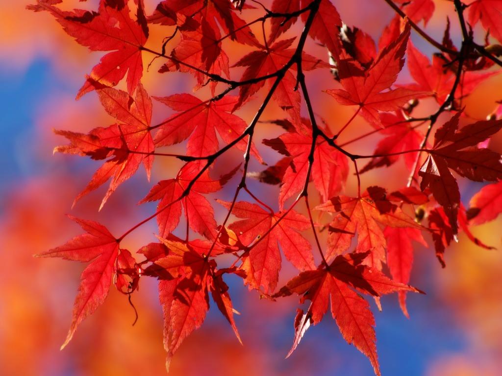 Download Besplatne Slike I Pozadine Za Desktop Crveno Lišće