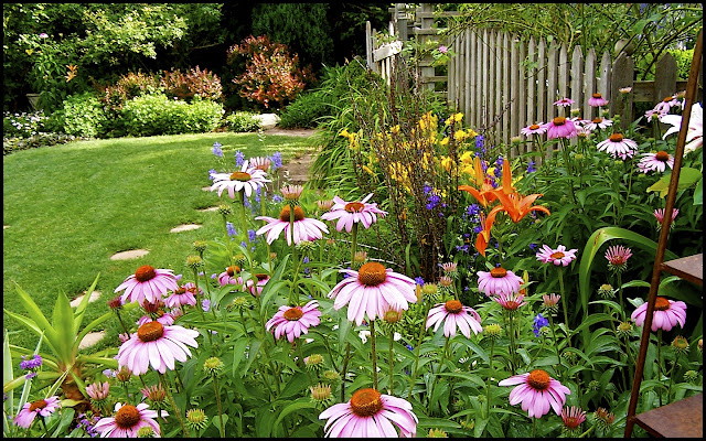 purple coneflower, larkspur in garden border