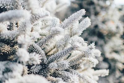 święta, Boże Narodzenie, zima, przesilenie, Yule, Szczodre Gody, Saturnalia, religie